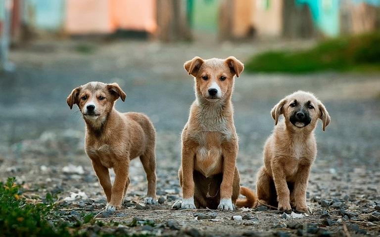 Kiwoko fomenta la adopción, el respeto, el máximo cuidado y la tenencia responsable de mascotas