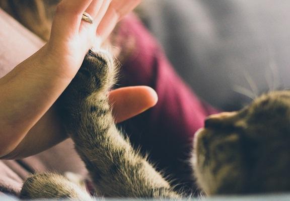 La interacción con animales disminuye el estrés y relaja la presión arterial