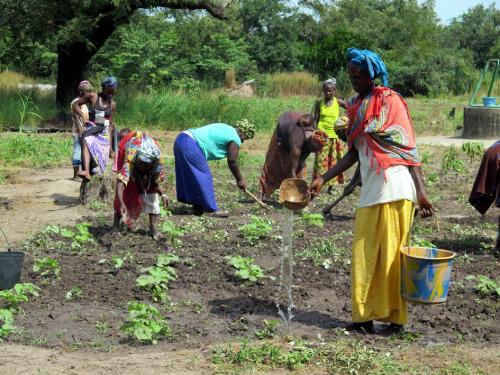 Mujeres en Senegal regando cultivos, en la zona en la que se construirá el dique-puente. Foto: @RosaTristan/Alianza por la Solidaridad.
