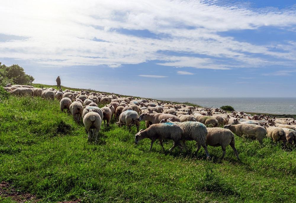 La aparición del pastoreo fue uno de los factores del comienzo de transformación de la Tierra.