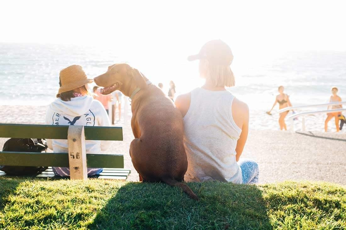 Cada vez son más numerosas las alternativas para pasar las vacaciones con tu mascota