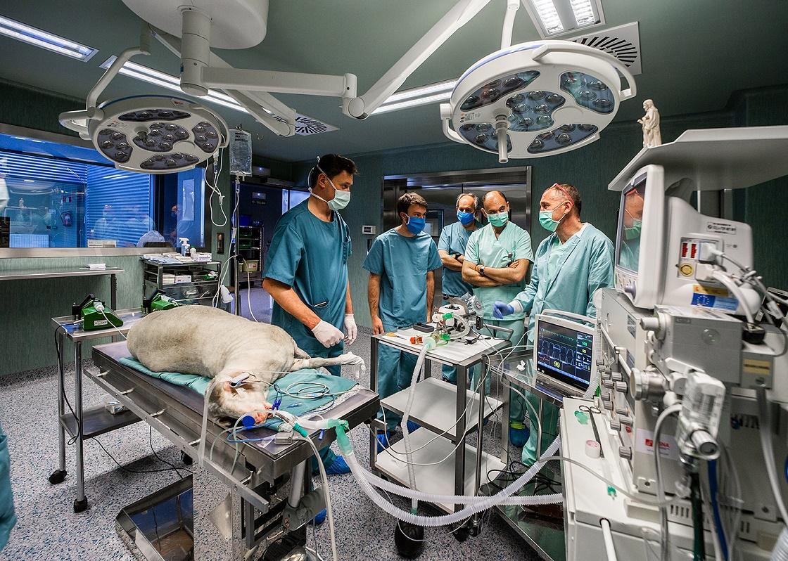 Pruebas clínicas  en animal (Foto:CIMA).