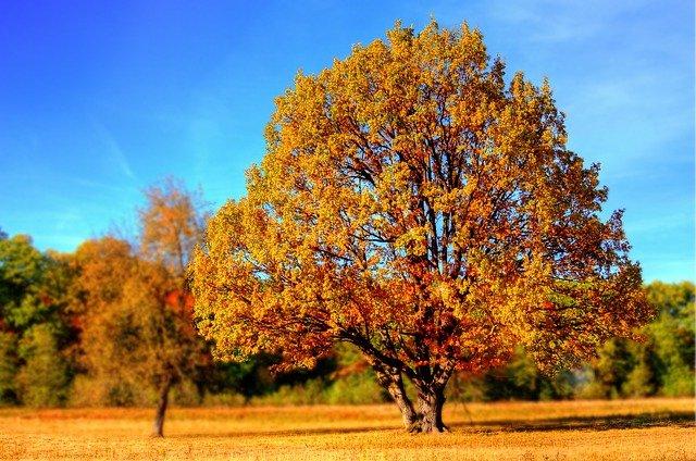 Hay especies de árboles que pueden absorber hasta cincuenta toneladas de dióxido de carbono al año