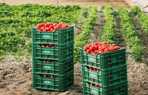 'La cocina de Alvalle' prevé producir 25 millones de litros de gazpacho este verano.