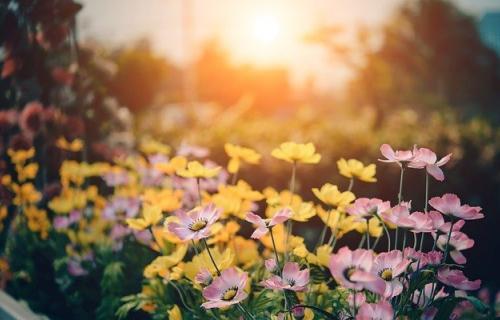 Consejos para cuidar nuestros jardines de una manera sostenible
