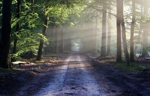 Entre las funciones que asumen los dirse ganan fuerza de forma notable los programas medioambientales.