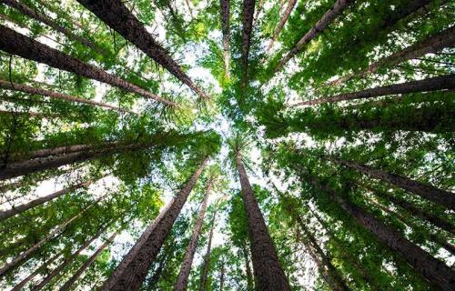 Los bosques, un sumidero esencial para compensar las emisiones de CO2