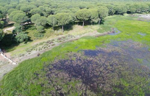 Humedal en Doñana.