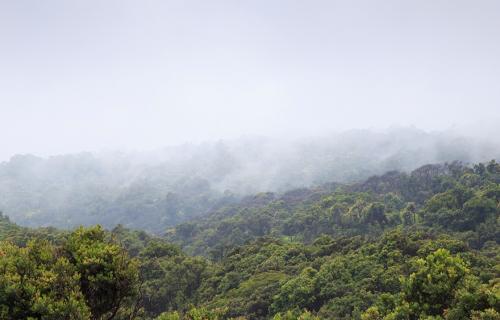 Nestlé asegura que el 80% de su cadena de suministro es libre de deforestación.