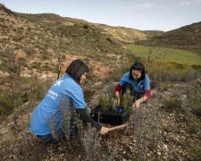 """Voluntarias de """"la Caixa"""" trabajan en acciones de reforestación."""