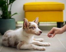 Desde Clínicanimal, resaltan la necesidad de que las familias con mascota tengan su equipo veterinario de referencia